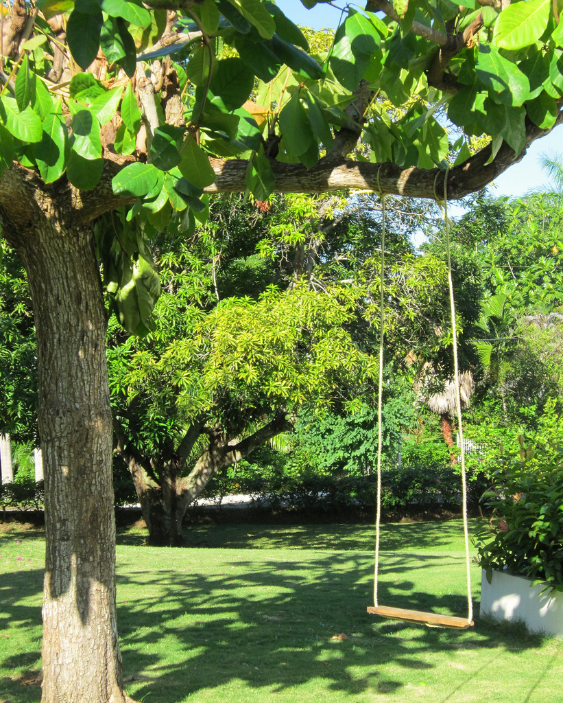 ... the Sea Grapes tree that holds the swings.  (The staff quickly added a second swing last winter when a certain brother and sister could not agree on whose turn was next.)