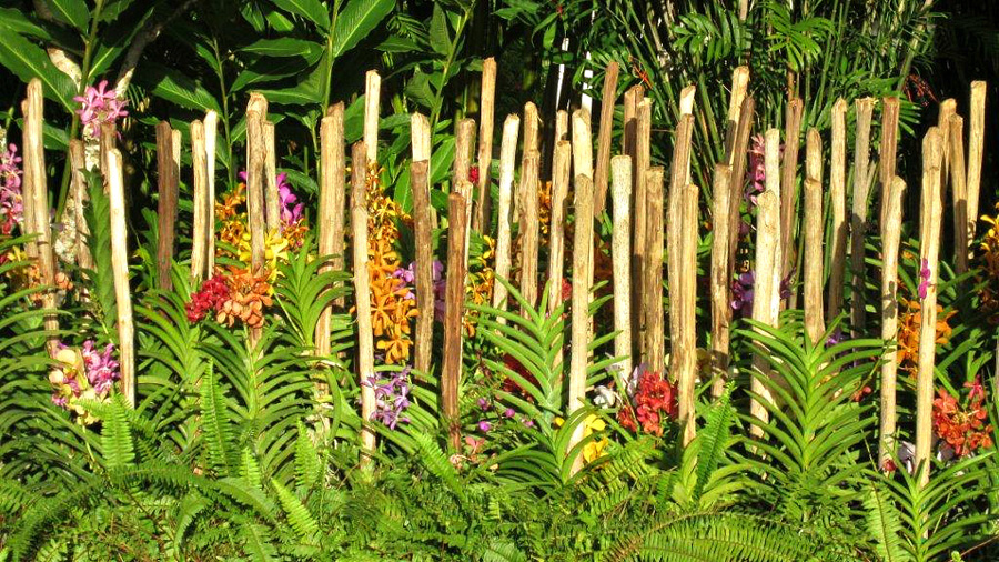 ... from the villa's own orchid garden that thrives in the rich Jamaican soil and many months of sun.